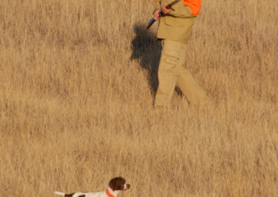 guided_upland_bird_hunting_in_montana