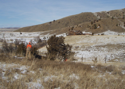 guided_upland_bird_hunting_in_montana_1