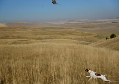 bird-hunting-montana